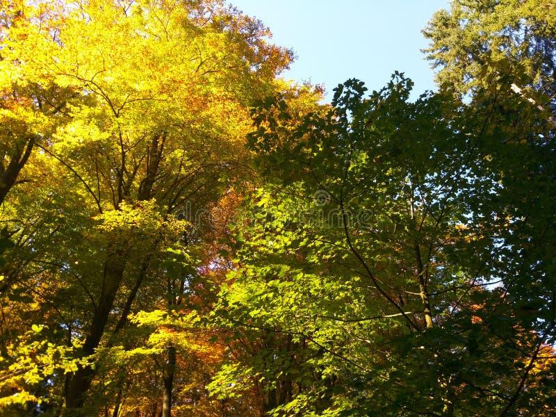 Herbst im Holz nahe Frankfurt lizenzfreie stockfotos
