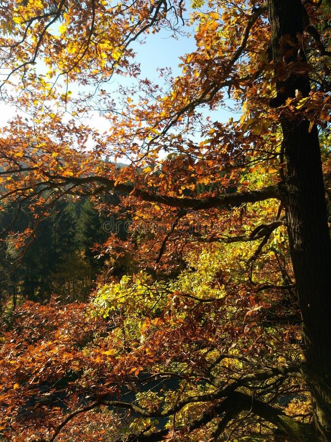 Herbst im Holz nahe Frankfurt am Main stockfotos