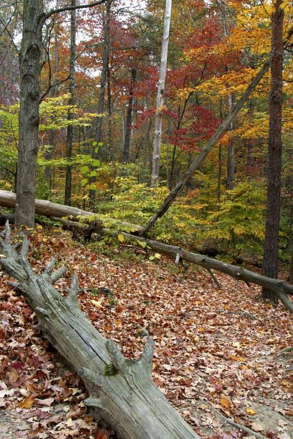 Download Herbst im Land stockfoto. Bild von draußen, blatt, nave - 32328