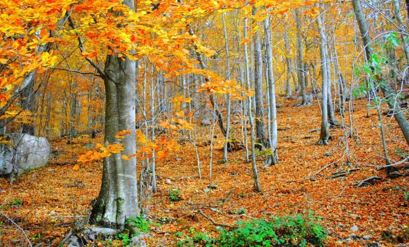Herbst im Montseny lizenzfreie stockfotos