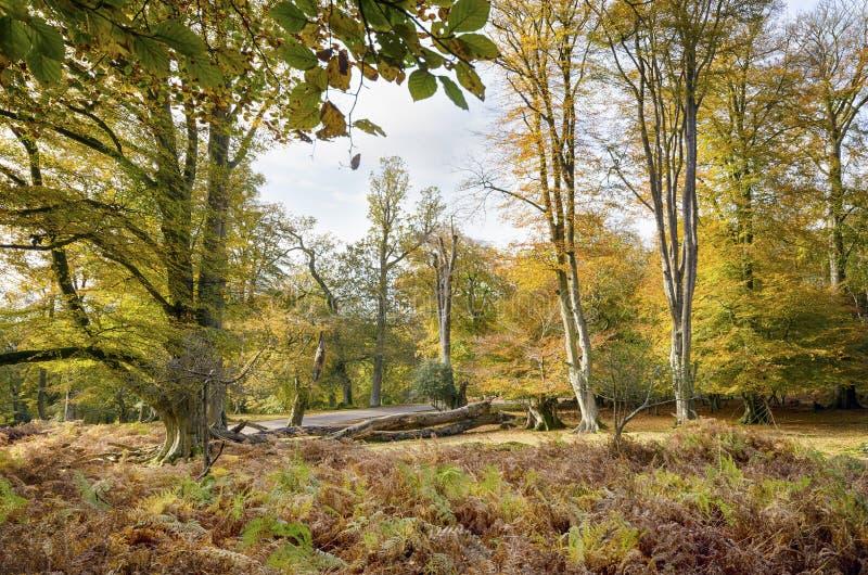 Herbst im neuen Wald stockbild