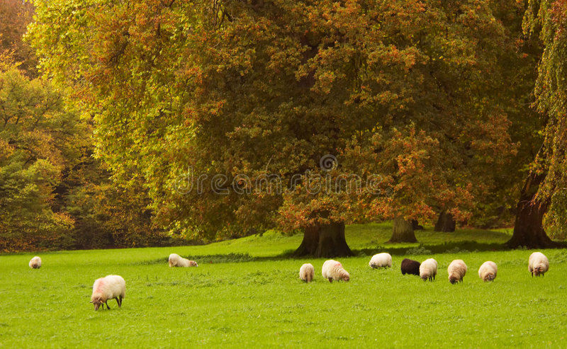 Herbst im Park lizenzfreie stockfotos