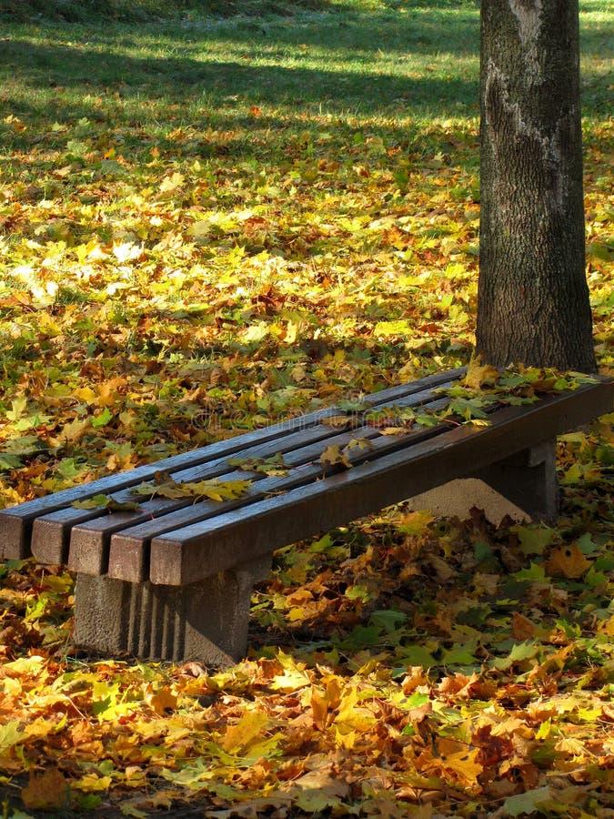 Herbst im Park lizenzfreie stockfotografie