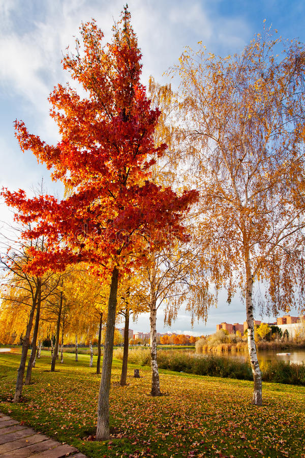 Herbst in der Parklagune lizenzfreies stockfoto
