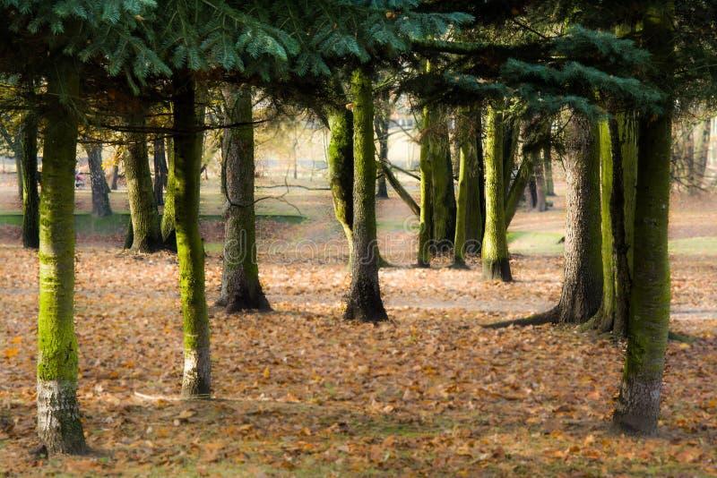 Herbst im Park, in den Bäumen und im Nebel lizenzfreie stockbilder