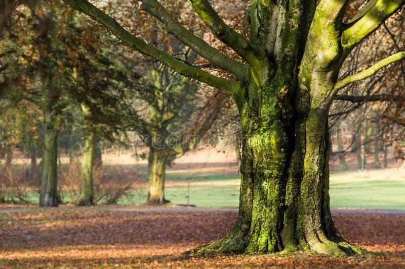 Herbst im Park, in den Bäumen und im Nebel lizenzfreies stockbild