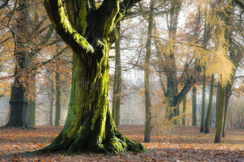 Herbst im Park, in den Bäumen und im Nebel stockfotos