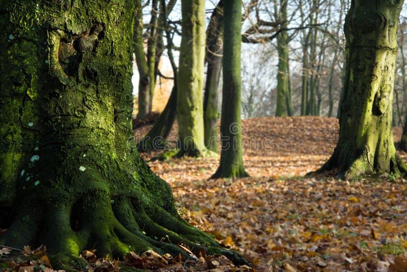 Herbst im Park, in den Bäumen und im Nebel lizenzfreies stockfoto