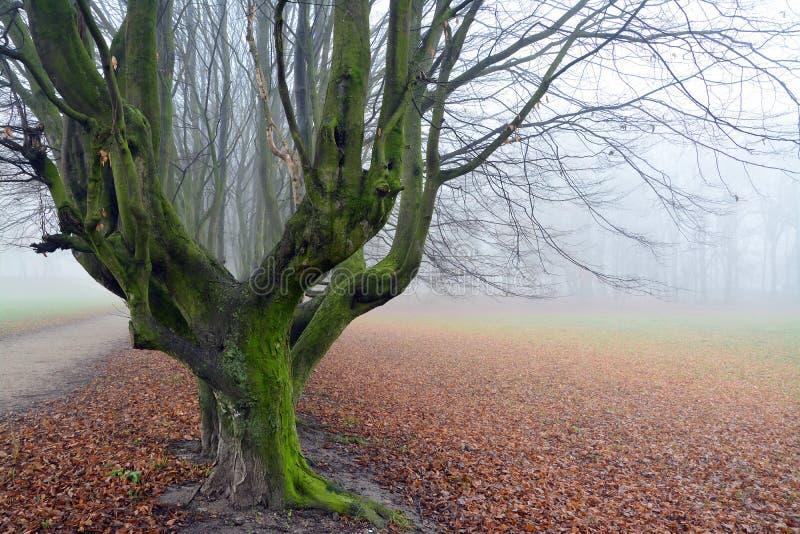 Herbst im Park, in den Bäumen und im Nebel stockfotografie