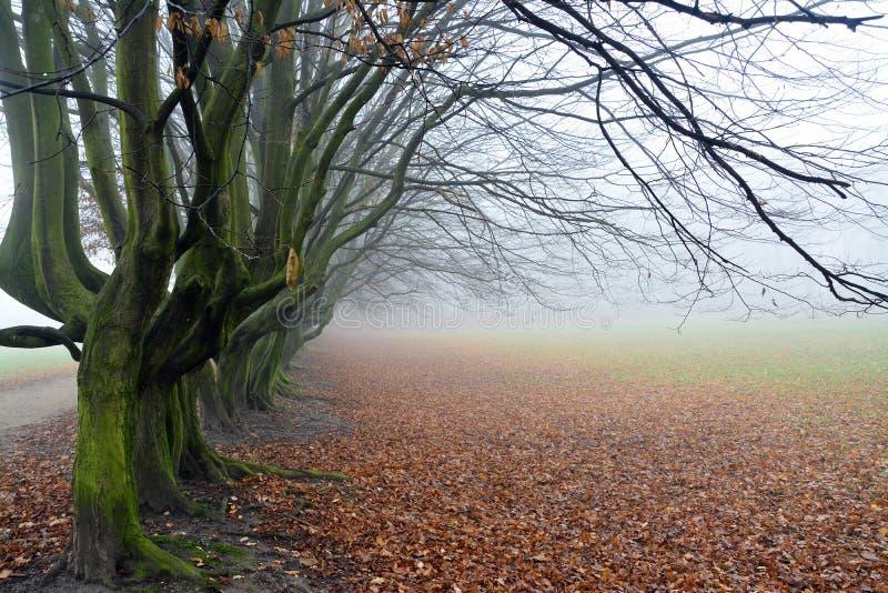 Herbst im Park, in den Bäumen und im Nebel lizenzfreie stockfotografie