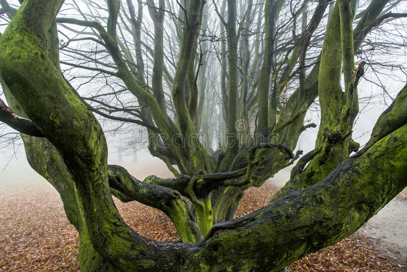 Herbst im Park, in den Bäumen und im Nebel stockbilder