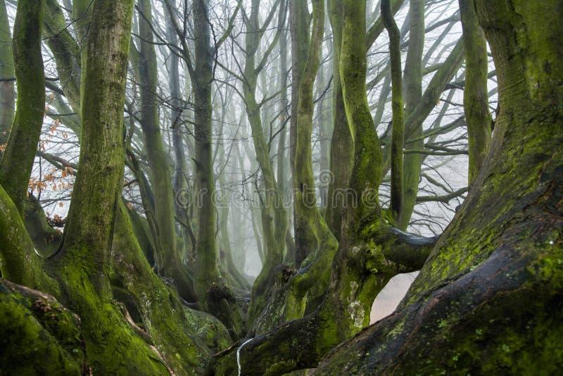 Herbst im Park, in den Bäumen und im Nebel stockbild