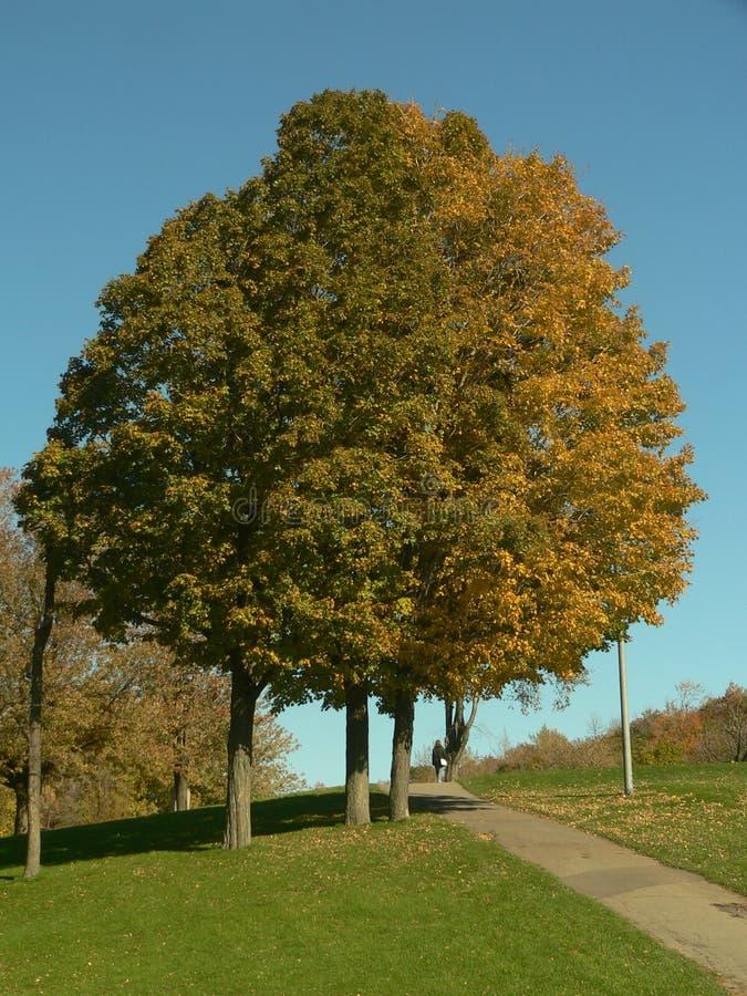 Herbst im Park II lizenzfreies stockfoto