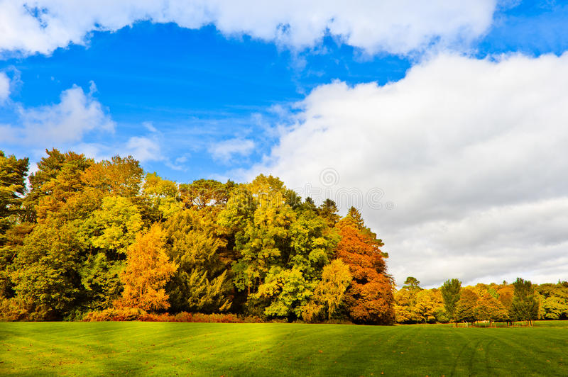 Herbst im Park am sonnigen Tag, Irland lizenzfreies stockbild