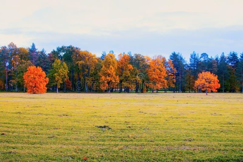 Herbst im Park und auf den Straßen stockbild