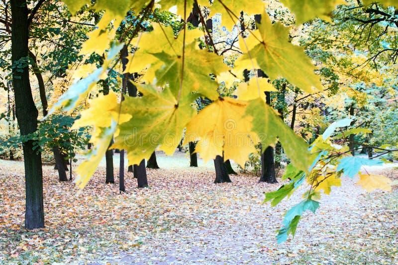 Herbst im Park und auf den Straßen stockfotografie
