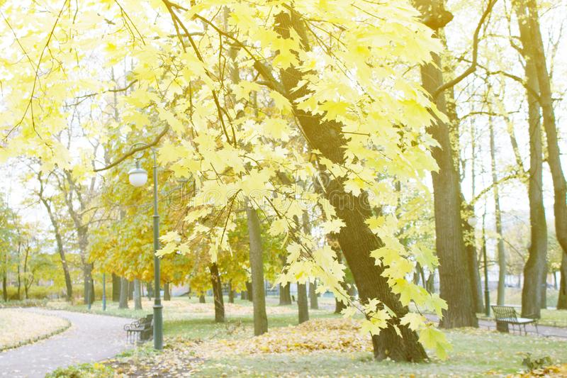 Herbst im Park und auf den Straßen lizenzfreie stockfotos