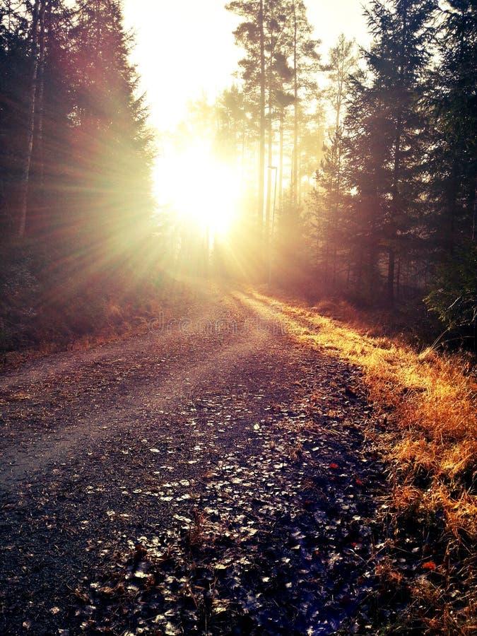 Herbst im schwedischen Waldland stockfotos