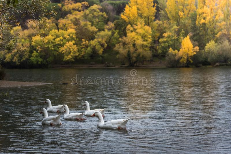 Herbst im See stockfotografie