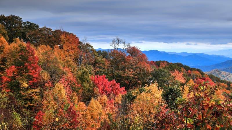 Herbst im Smokies lizenzfreies stockbild
