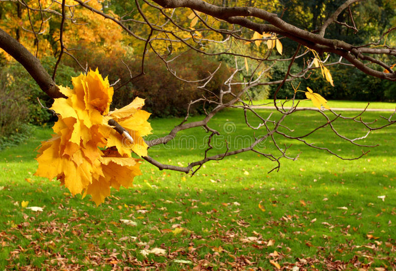 Herbst im Stadtpark. stockfotos
