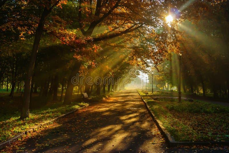 Herbst im Stadtpark Die Stadt von Khmelnitsky lizenzfreie stockfotos