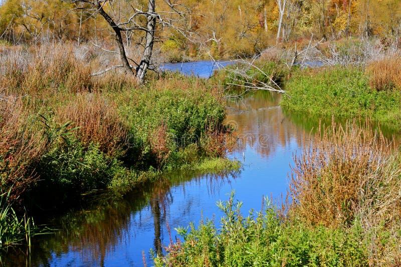Herbst im Sumpf lizenzfreies stockfoto