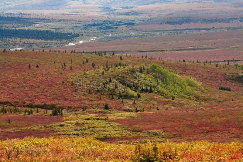 Herbst im Tal in Denali nationales P stockfotografie