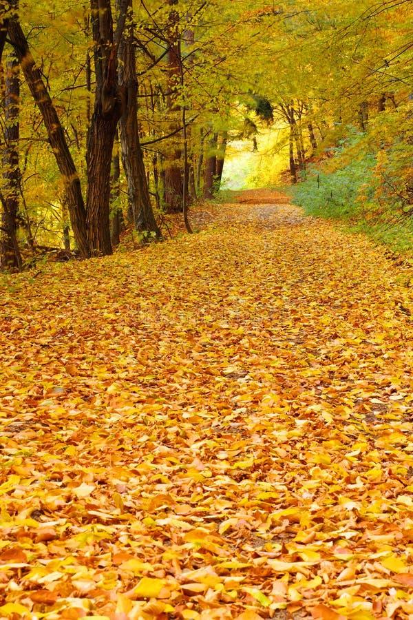 Herbst im Wald stockfoto
