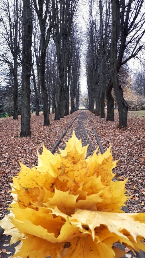 Herbst im Wald stockfotos
