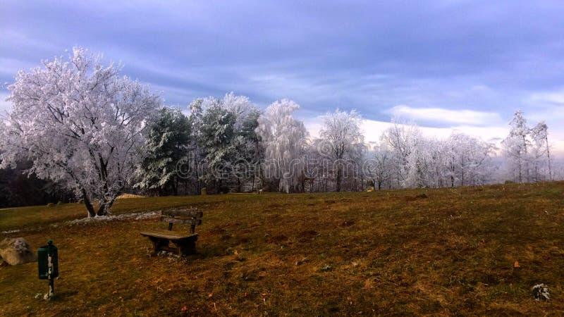 Herbst im Winter zur Weihnachtszeit stockfotografie
