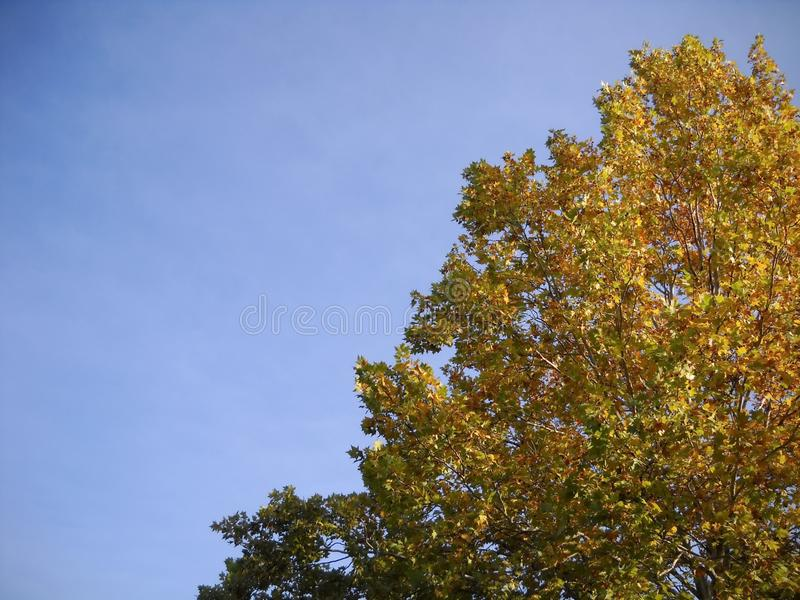 Herbst im Wipfel und im Himmel stockfotos
