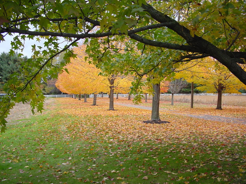 Herbst innen stockfotografie
