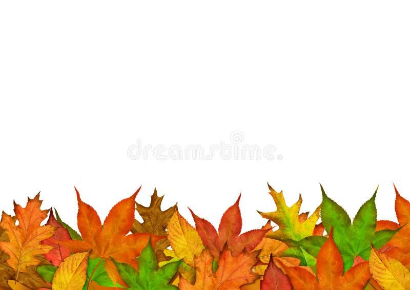 Herbst-Jahreszeit-Blätter lizenzfreie stockfotos