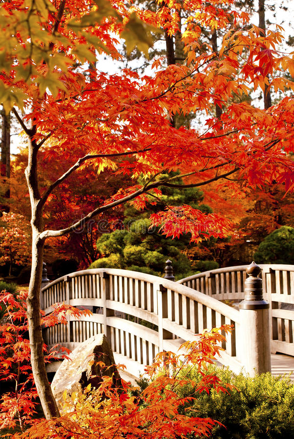 Herbst-Japaner-Garten lizenzfreies stockfoto