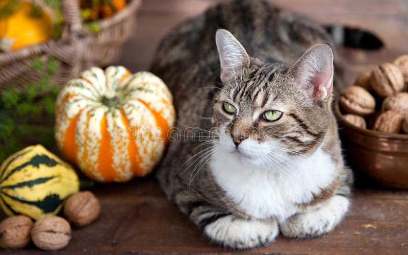 Herbst-Katze lizenzfreies stockfoto