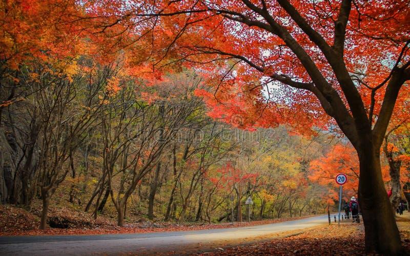 Herbst in Korea stockbilder