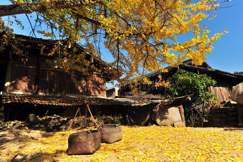 Herbst-Landschaft stockfoto