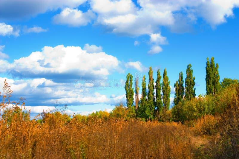 Download Herbst-Landschaften stockfoto. Bild von betrieb, weide - 12201268