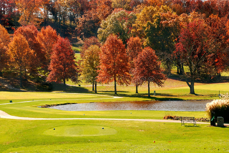 Herbst-Laub am Golfplatz stockbild