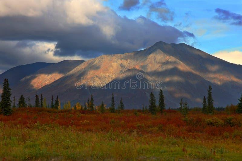Herbst-Laub im ausgedehnten Durchlauf, Alaska lizenzfreie stockfotografie