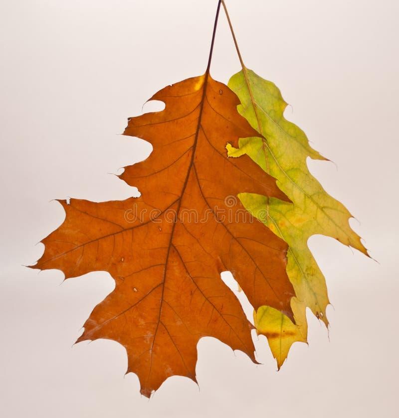 Herbst, Laub, verlässt die Farbe des Baums im Herbst lizenzfreie stockbilder
