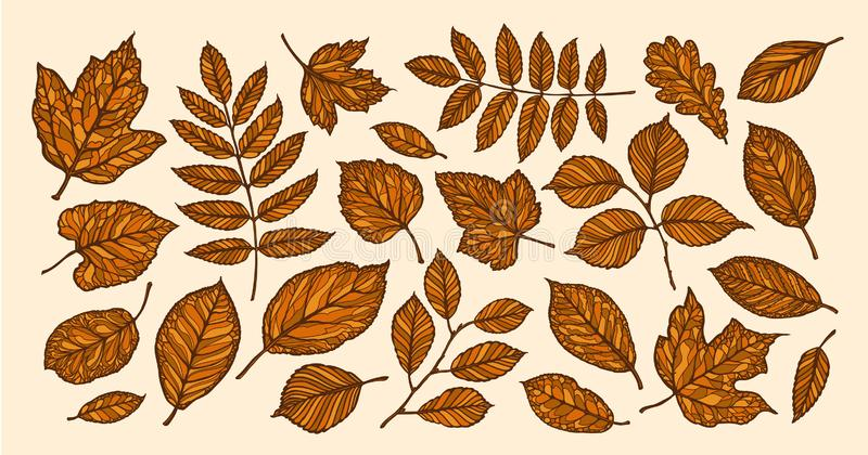 Herbst, Laubfallkonzept Dekorative Baumblätter Auch im corel abgehobenen Betrag vektor abbildung
