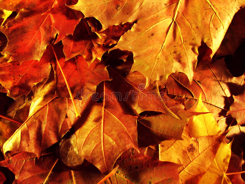 Herbst leaves2 stockfoto