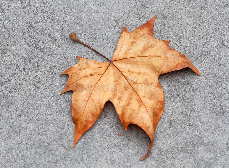 Herbst lef lizenzfreies stockfoto