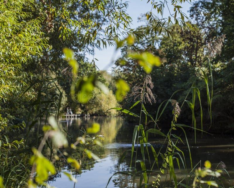 Herbst in London, sonniger Tag - grüne Niederlassungen und Bäume durch einen Teich lizenzfreie stockbilder