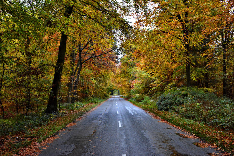 Herbst an Lynford-Arboretum stockfotografie