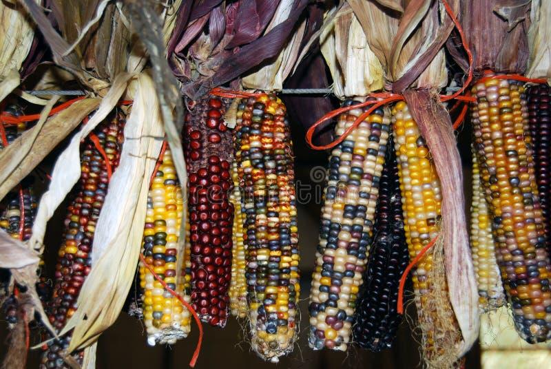 Herbst-Mais stockfoto
