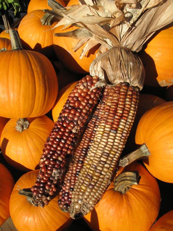 Herbst-Mais mit Kürbisen stockfotos