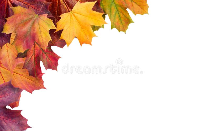 Herbst Mehrfarbige Herbstblätter lizenzfreies stockbild